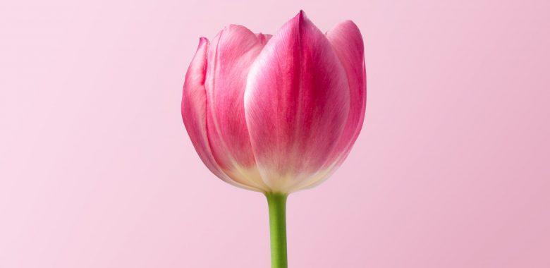 a pink flower of gratitude
